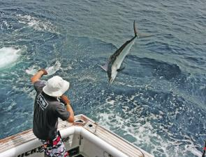 There will still be a chance to nail a small black marlin in the New Year.