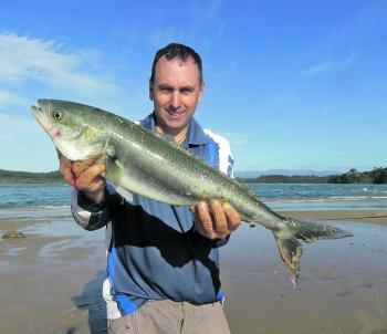 When the sweep and swell is too big, fish like Australian salmon will enter river mouths chasing baitfish.
