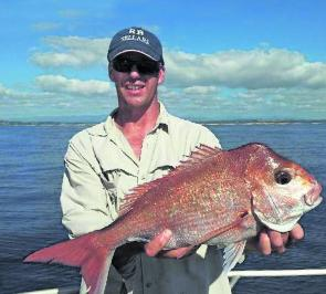 Cracking snapper like this 4kg fish have been readily available on most local reefs.