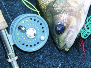Any small side creeks and pockets are well worth a few casts. Keith Endicot slowly works out a small surface fly.