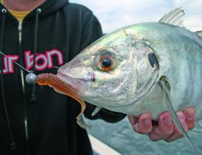 Winter means trevally on the South Coast with Squidgy Wrigglers favourites among soft plastic anglers.