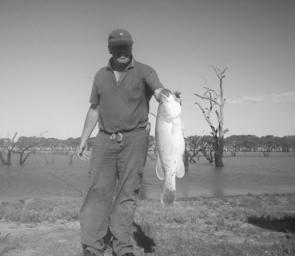Taylors Lake produces some good Murray cod, like this one from last summer.