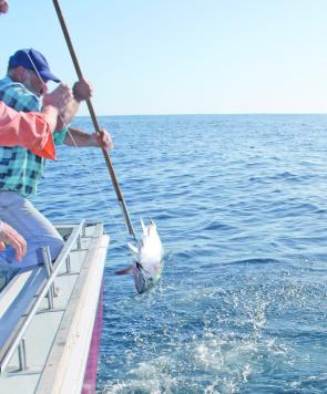 SBT fishing is an exciting and alluring to game anglers all over Australia.