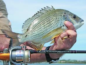 Bream like this will be more frequent captures along the walls this month.