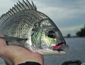 Bombing the deep rock walls with blades is a great way to score a few nice bream.