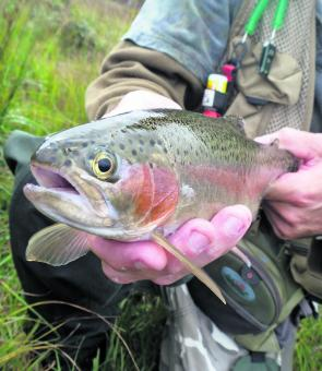 Lucas Green shows off a lovely trout caught on a dry fly. The season finishes on the Queen's Birthday Monday.