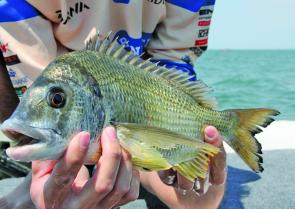 Bream are loving the warmer weather, try focusing your efforts in shallow waters.