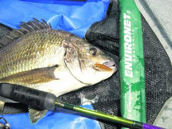 The bream will be heading upstream soon, so lure casters will have a ball targeting them.