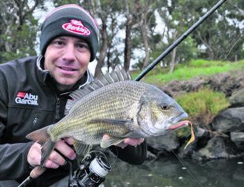 "Melbourne's resident bream are still quite active along the rocky margins and respond well to small diving minnows and worm or grub pattern soft plastics, such as this Gulp 3"" Nemesis."