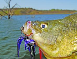 At Lake Windamere bottom-contact lures such as this skirted jig are best fished on rocky points and banks. Subtle twitches on the bottom, mixed with a slow, dragging retrieve or small hops are all that is needed if there are hungry golden perch about.