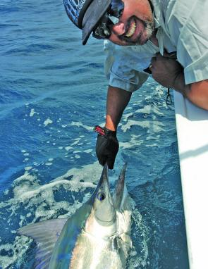 Good target areas to chase little marlin will depend on the wind. Light southeasterlies usually coincide with warm blue water and all grounds can produce fish when the water is clean.