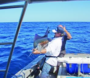 Sailfish numbers are still scarce at present, but should return to normal by December.