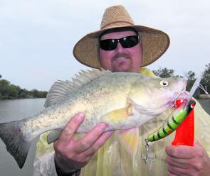 Even golden perch will strike the larger lures with newfound aggression as smaller prey items start to become scarce.