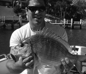 There have been plenty of good bream on the chew around Brisbane Water.