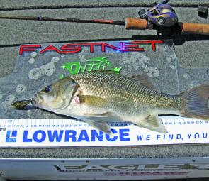 The author caught this Lake St Clair bass on a deep Jackall lure. The fish go deep on these hot days.