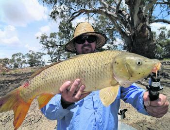 Carp have come on the chew. Don't just leave your catch on the bank to rot, either bury it or use it for yabby bait and compost.