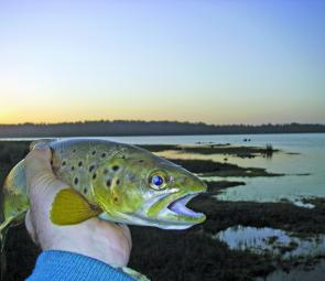 Evening is the time for brown trout to be mooching in the shallows – look for the swirls and dimples of feeding trout in the small bays and backwaters.