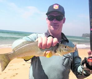 Whiting are making a lot of beach fishers happy.