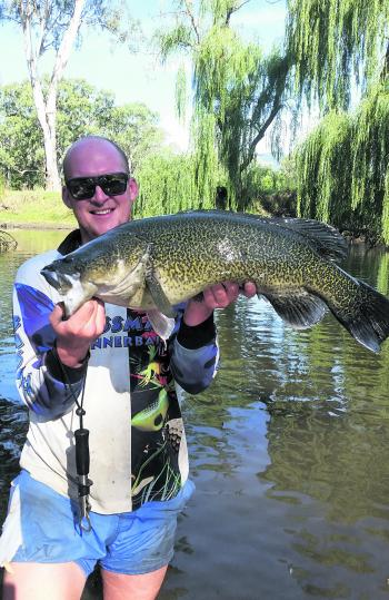 The author with a decent Murray cod. Big fish have been a bit of a rarity this season but are still in the rivers and worth your persistence.