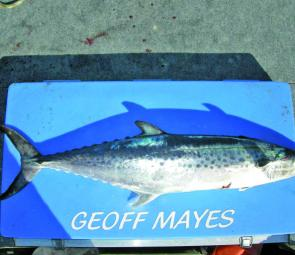 This spotty mackerel taken by the author is an example of what's on offer for inshore anglers all along the tropical coast at this time of year. There should be plenty of these around over the next couple of months.