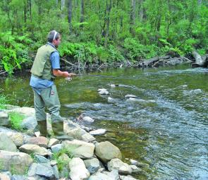 The author making the most of the trout season on the Tanjil River West Branch before the season closes on Monday the June 8.