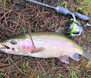 Good looking rainbow trout are a great test for fly and lure anglers alike, and are a great way to get kids into fishing.