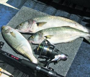 Tailor should still be about this month. Trolling, casting and bait fishing are all effective ways to catch them.