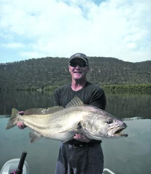 A live herring was the undoing of this impressive mulloway.