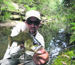 Bass inhabit the headwaters of most creeks that adjoin the Hawkesbury. Small spinnerbaits and surface lures are all that's required to get stuck into a few.