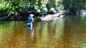 Hopper season is a great time to get into flyfishing, especially on the Leven River at Loongana.