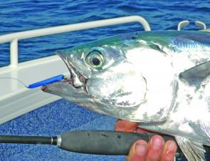 Mack tuna on metal is a common theme in the Rainbow Channel.