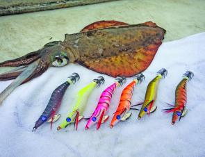 Black Magic's Squid Snatcher jig range is not just affordable but extremely effective on calamari.