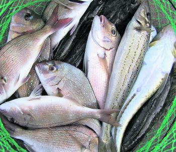 A mixed bag for Ross from Corio Bay.