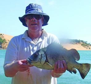 Bream of all sorts are caught from the rocks in the Yellow Patch channel including this blubberlip bream.