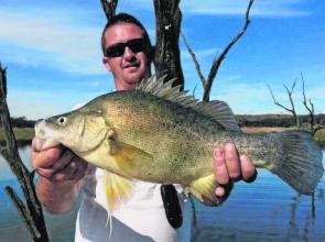Golden perch have been good fun on bait and lure amongst the trees in the Murrumbidgee Arm of Burrinjuck Reservoir.