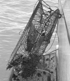 The offending crab pot was stored on the back of the houseboat, out of smelling range, until we could take it home.