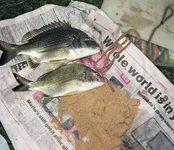 A couple of plate bream taken on live worms. These were taken off the shore at Stockton at night.