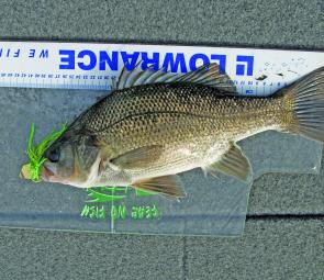 The author cast a Chatterbait from the bank for this St Clair Winter bass.