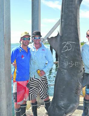 The crew of Lake Macquarie GFC boat Redemption brought home this 357kg tiger shark, taken on 37kg tackle.
