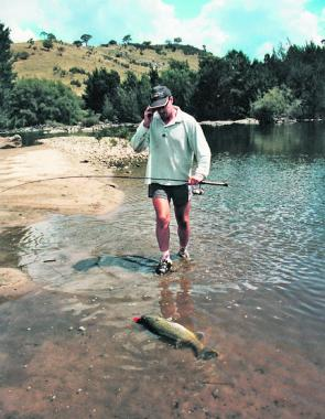The average size of Murray cod seems to be increasing each year, possibly as a result of the popularity of catch-and-release fishing.