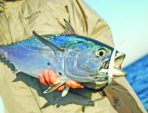 This tuna fell for a Berkley Shad during a plastics jigging session.