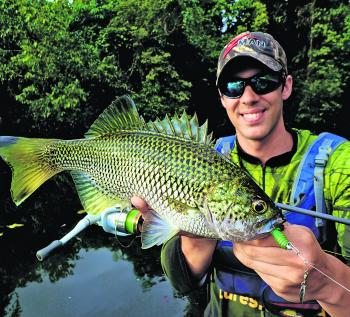Jungle perch, as always, are a viable catch if you're fishing TNQ's freshwater.