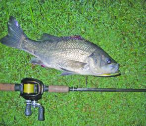 Bass are a viable option in the upper reaches of the creeks this month.