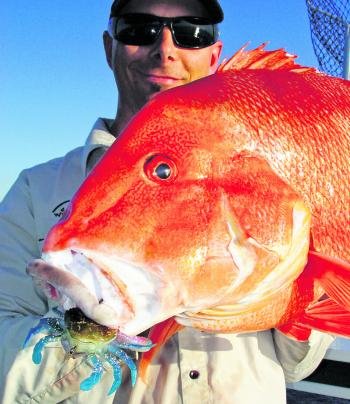 Fish Candy's Smash Crab is finding a nice little niche amongst offshore anglers – red emperor, snapper and many other reefies love a feed of crab. Pic courtesy River 2 Sea.