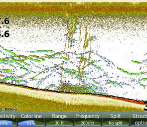 A Lowrance shot of bass feeding in among the tall weed at St Clair.