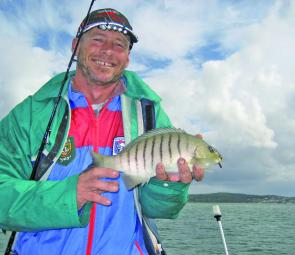 "Even when chasing whiting on 2"" Gulp worms, Ray Lettice still manages a nice luderick."