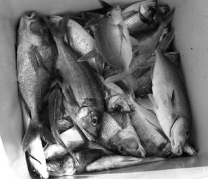 What anglers like: A bag full of tasty reef fish destined for the table.