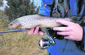 This small brown was picked up spin drifting the Eucumbene River at Denison campground. Weekdays are a better option when fishing the spawn run as angler numbers can be lower than on weekends – but not always!