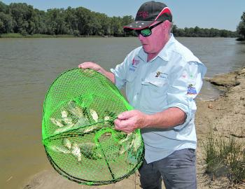 There are literally millions of juvenile carp in the system. This net full is the norm when trying to catch yabbies.
