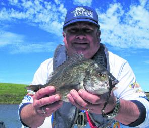 A typical Curdies bream that took a Strike Tiger 4'' curl-tail worm.